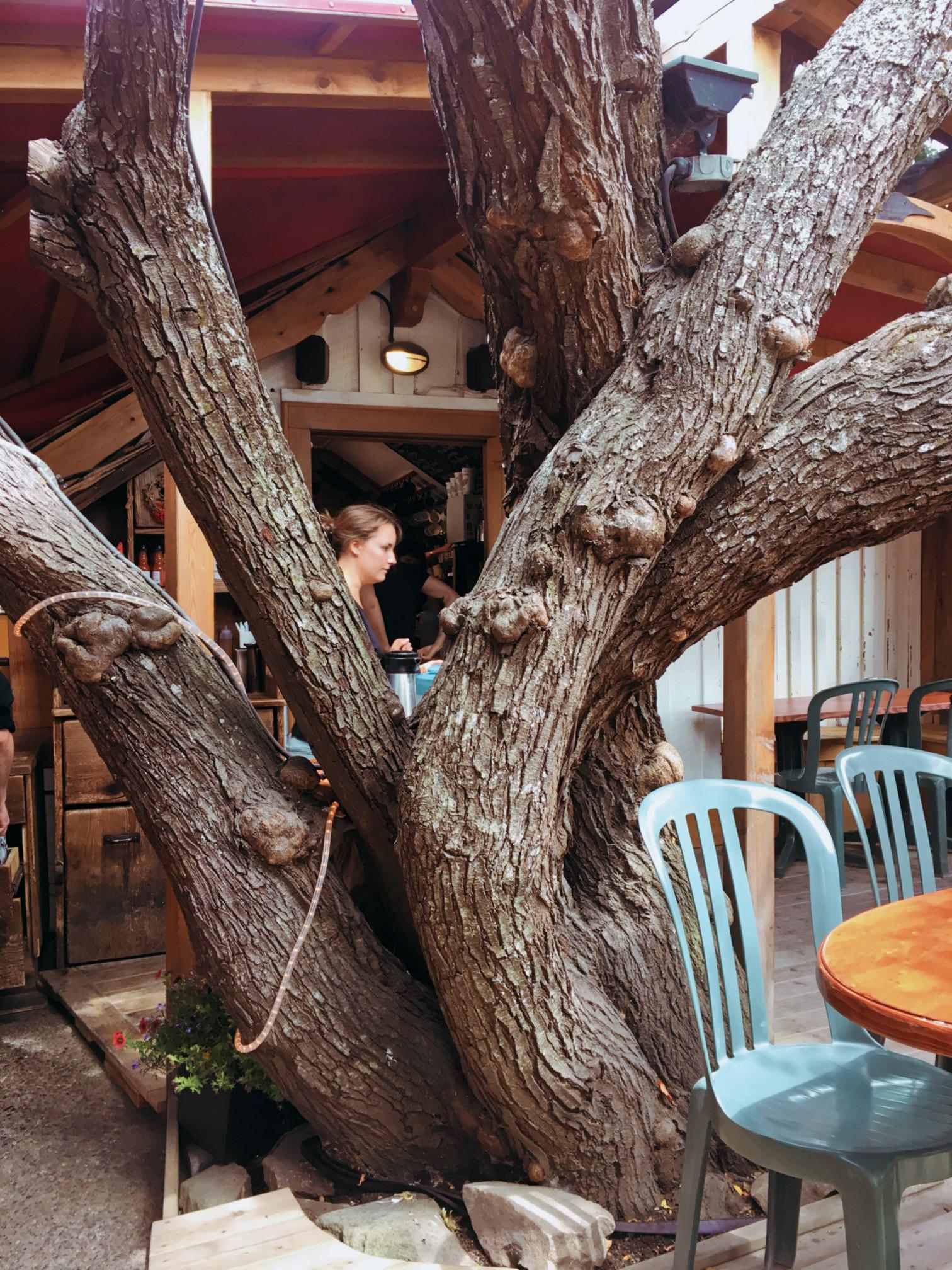 saltsp-treehs-cafe