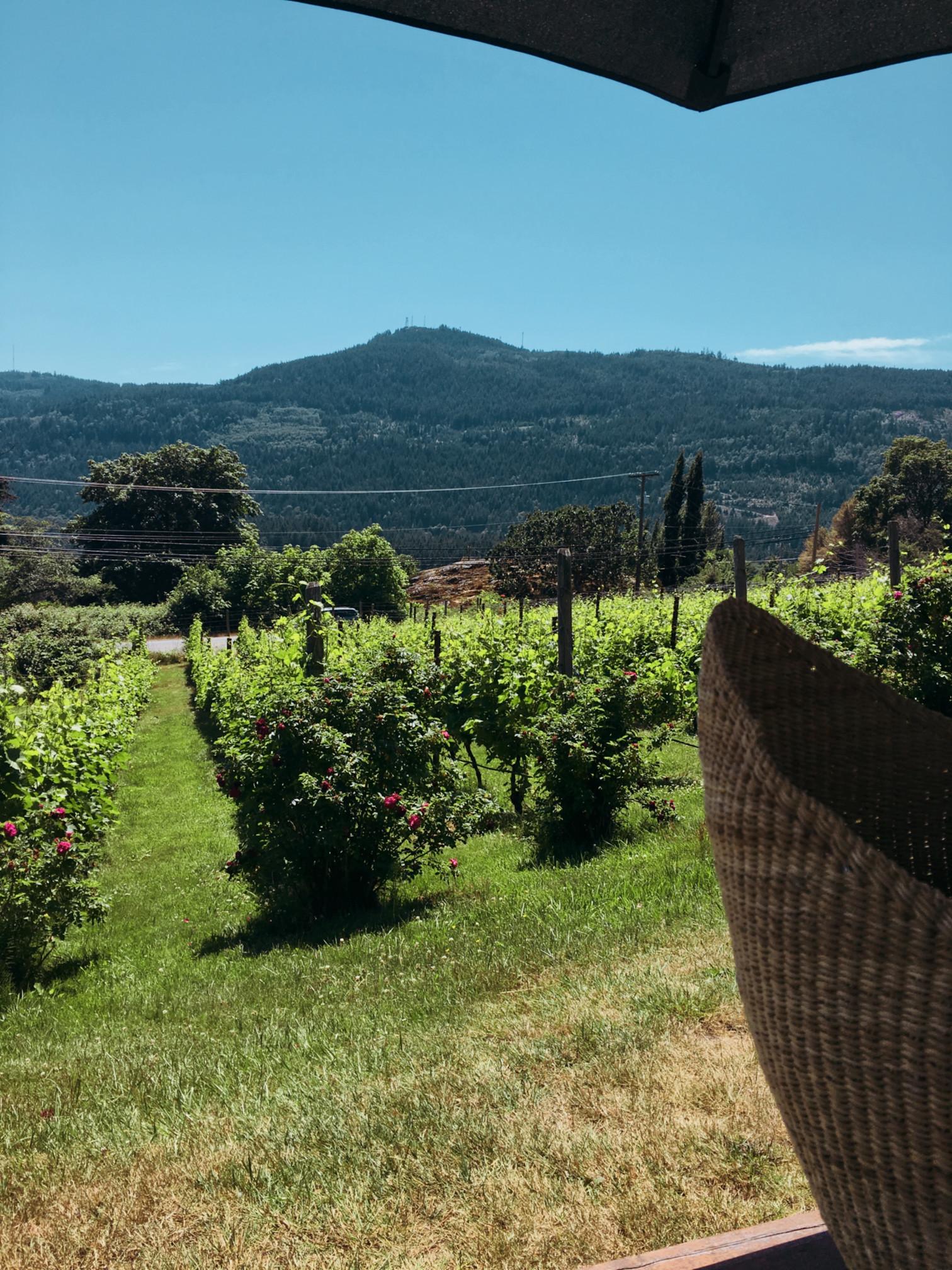 winery-saltsp-3